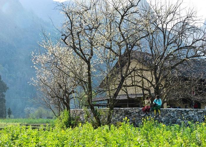 Hà Giang mùa hoa mận