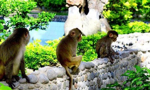 Khu du lịch Đảo Khỉ