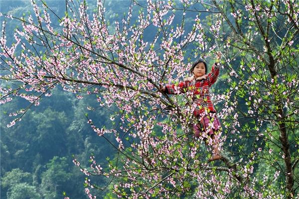 Mộc Châu 4 mùa hoa nở