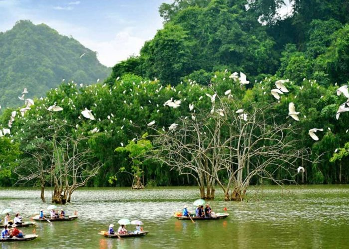 Vườn chim Thung Nham Ninh Bình
